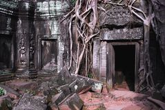 Ta Prohm temple. The ruins of Ta Prohm temple in Siem Reap Stock Images