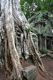 Ta Prohm Temple. Ruins of Ta Prohm Temple overtaken by silk cotton trees in Angkor Wat, Cambodia Stock Image