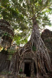 Ta Prohm temple Stock Photo