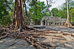 Ta Prohm temple Royalty Free Stock Photography