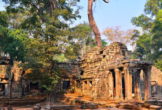 Ta Prohm Temple, ancient temple in Siem Reap. Stock Image