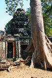 Ta Prohm temple,Angkor Royalty Free Stock Photography
