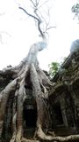 Ta Prohm Temple, Angkor, Cambodia Royalty Free Stock Images