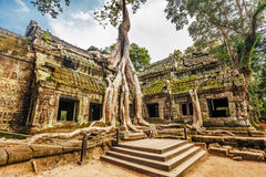 Ta Prohm Temple, Angkor, Cambodia Royalty Free Stock Photo