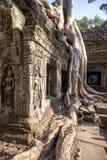 Ta Prohm Temple, Angkor, Cambodia Royalty Free Stock Photos