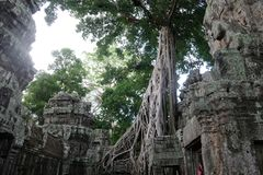 Ta Prohm temple in Angkor, Cambodia royalty free stock photos