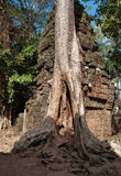 Ta Prohm Temple. Angkor. Cambodia Stock Images