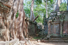 Ta Prohm Temple. Angkor. Cambodia Royalty Free Stock Images