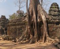 Ta Prohm, temple at Angkor, Cambodia Stock Photography