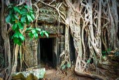 Ta Prohm Temple, Angkor, Cambodia Stock Photos
