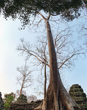 Ta Prohm Temple in Angkor Complex, Cambodia Royalty Free Stock Photos