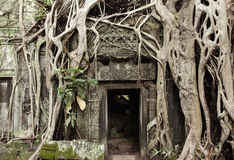 Ta Prohm Temple, Angkor Historical Park, Cambodia Royalty Free Stock Images