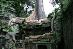 Ta Prohm temple. Angkor, Siem Reap. Cambodia Stock Images