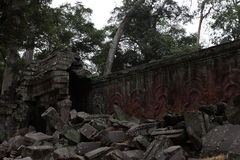 Ta Prohm Temple in Angkor Stock Photos