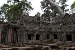 Ta Prohm Temple in Angkor Stock Images