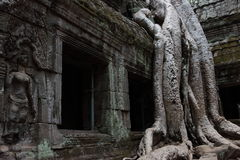 Ta Prohm Temple in Angkor Stock Photography