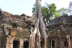 Ta Prohm temple at Angkor, Siem Reap Province, Cambodia Royalty Free Stock Photo