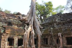 Ta Prohm temple at Angkor, Siem Reap Province, Cambodia Stock Images