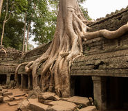Ta Prohm Temple in Angkor Thom Cambodia Royalty Free Stock Photo