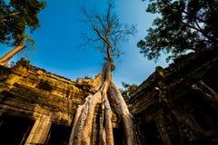 Ta Prohm temple Angkor Wat Stock Photography