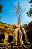 Ta Prohm temple Angkor Wat Stock Image