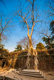 Ta Prohm temple Angkor Wat Stock Images