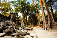 Ta Prohm temple Angkor Wat Royalty Free Stock Image