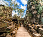 Ta Prohm temple at Angkor Wat, Cambodia Stock Images