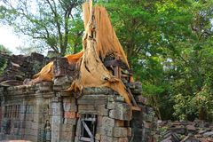 Ta Prohm temple in Angkor Wat, Cambodia Royalty Free Stock Photos