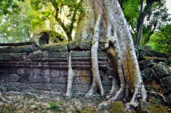 Ta Prohm temple in Angkor Wat Stock Photos
