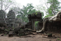 Ta Prohm Temple in AngKor Wat Royalty Free Stock Photography