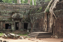 Ta Prohm Temple in AngKor Wat Royalty Free Stock Photos
