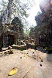 Ta Prohm temple at Angkor Wat, Siem Reap, Cambodia. Royalty Free Stock Image