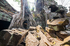 Ta Prohm temple at Angkor Wat, Siem Reap, Cambodia. Stock Photo