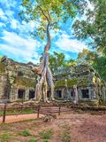 Ta Prohm Temple - Angkor Wat - Siem Reap - Cambodia Royalty Free Stock Photo