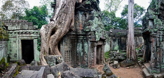 Ta Prohm temple in Angkor Wat Stock Photography
