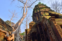 Ta Prohm temple with big tree and roots. Stock Photography