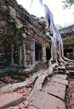 Ta Prohm temple with big tree and roots. Royalty Free Stock Photography