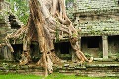 Ta Prohm Temple, Cambodia Stock Photos