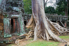 Ta Prohm Temple in Cambodia Stock Images