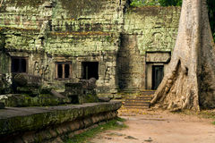 Ta Prohm Temple in Cambodia Royalty Free Stock Photo