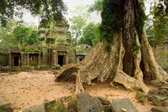 Ta Prohm Temple in Cambodia Stock Image