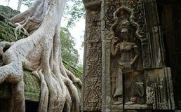 Ta Prohm. Temple, Cambodia, Angkor wat Stock Photos