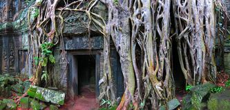 Ta Prohm temple, Cambodia stock images