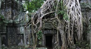 Ta Prohm temple,  Cambodia Stock Images