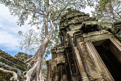 Ta Prohm Temple in Cambodia Royalty Free Stock Photography