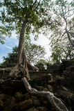 The Ta Prohm Temple in Cambodia Royalty Free Stock Images