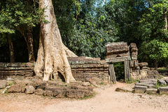 The Ta Prohm Temple in Cambodia Royalty Free Stock Photography