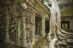 Ta Prohm Temple, Cambodia. Ta Prohm Temple ruins with silk cotton tree roots, Cambodia Stock Photography