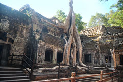 Ta prohm temple covered in tree roots Angkor Wat Cambodia Stock Photography
